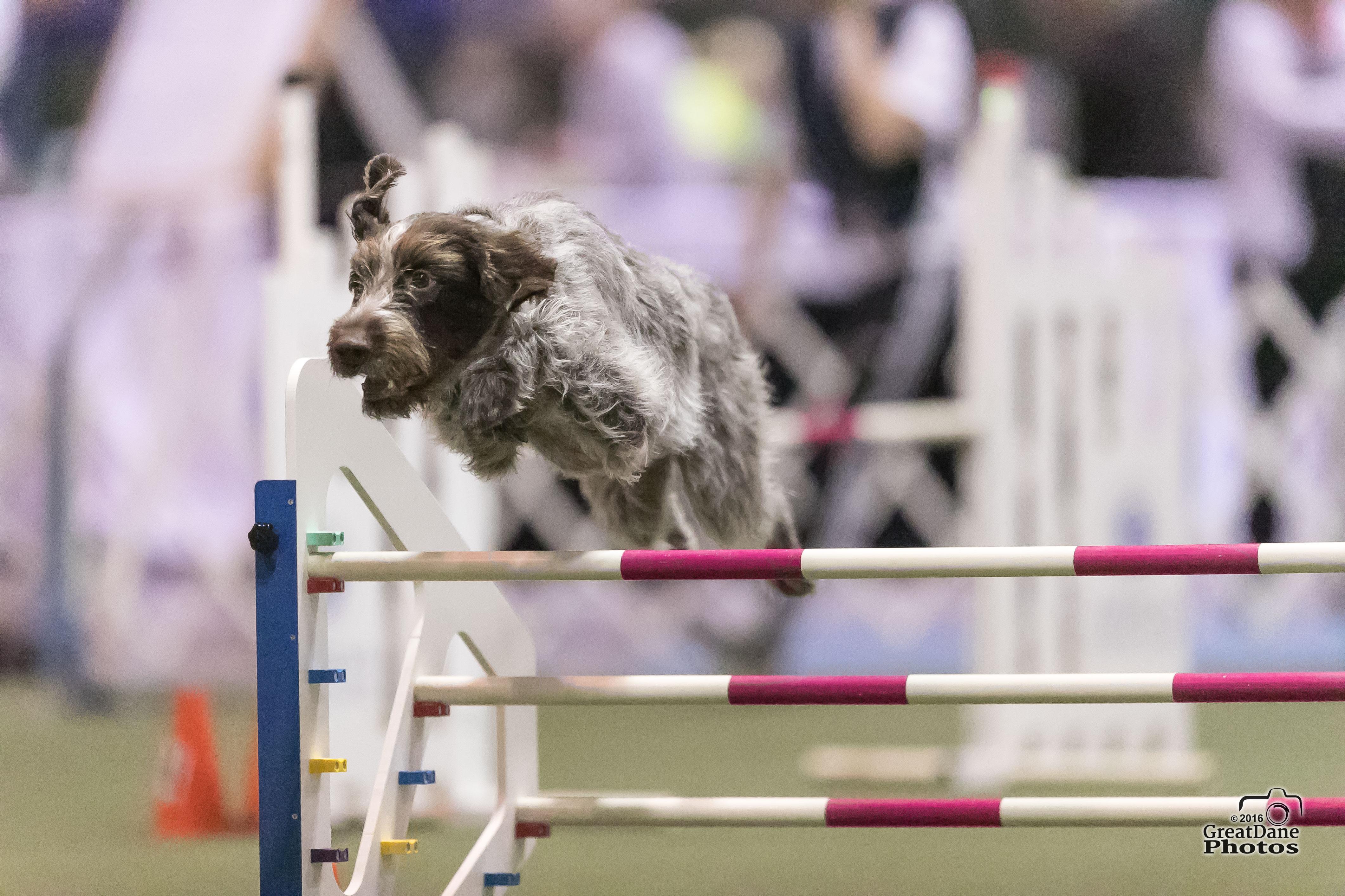 Dog Agility Training Palm Beach County